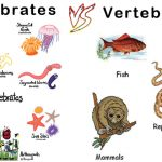 Differences-between-Invertebrates-and-Vertebrates